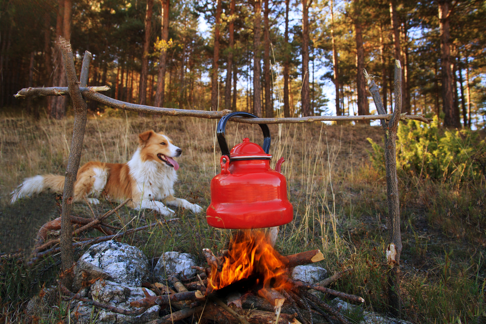 Free Dog Friendly Camping